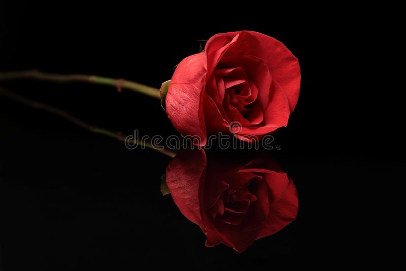 Rood nam op Zwarte Achtergrond toe stock afbeelding