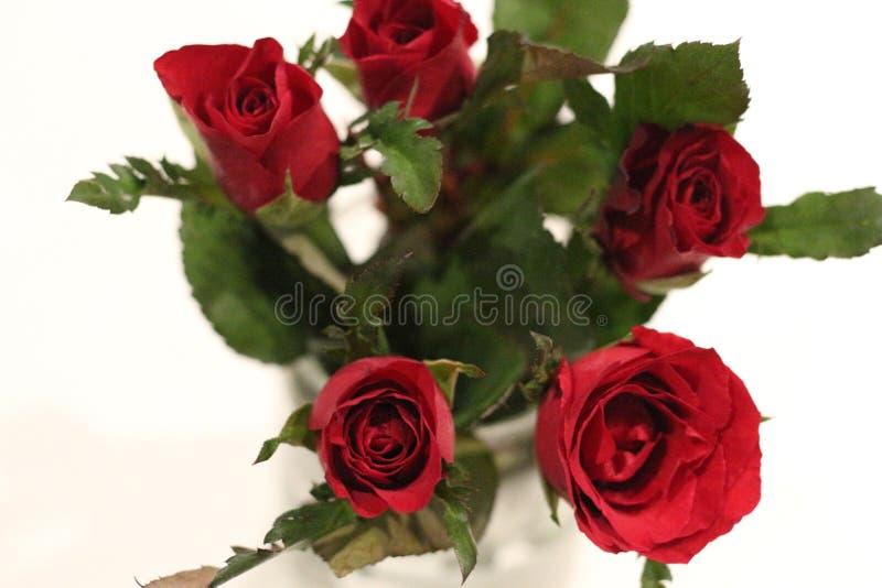 Rood nam in Thailad-bloem voor liefde toe royalty-vrije stock afbeelding