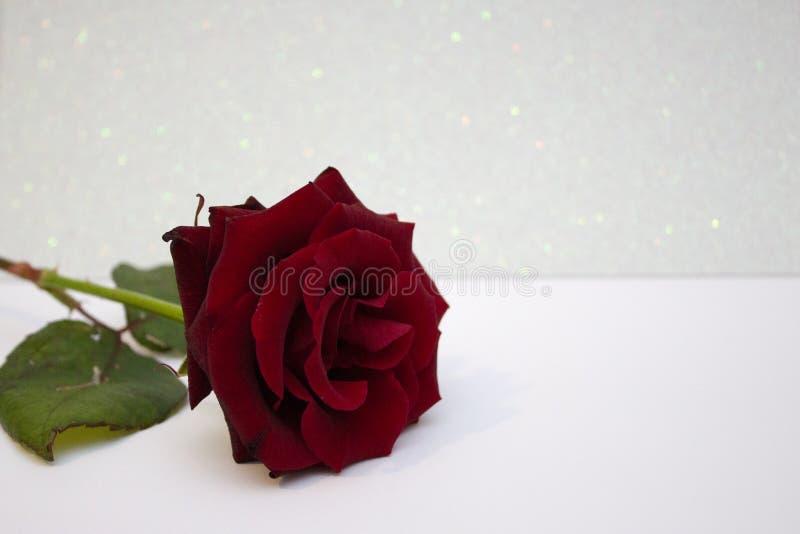Rood nam vage bokeh achtergrond toe Valentine of huwelijksachtergrond, de Dagkaart van Valentine Rosa op een witte glanzende acht royalty-vrije stock fotografie