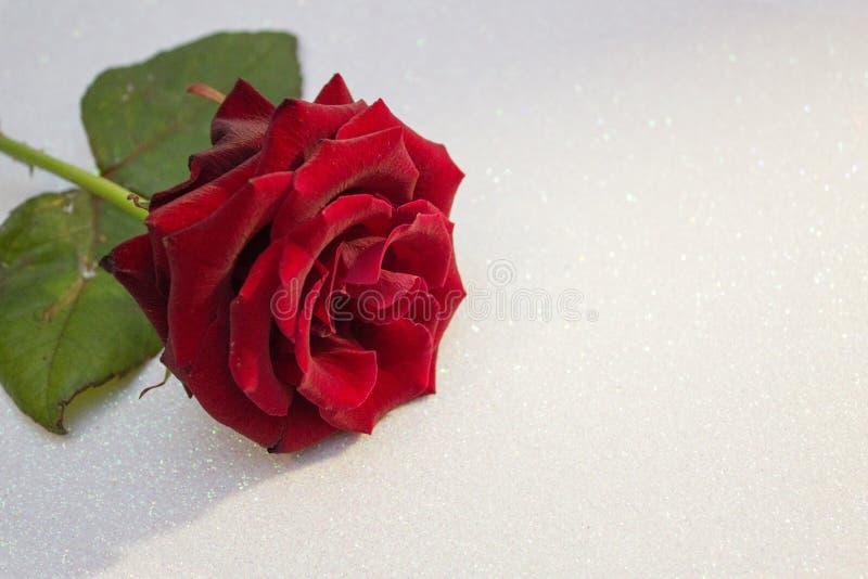 Rood nam vage bokeh achtergrond toe Valentine of huwelijksachtergrond, de Dagkaart van Valentine Rosa op een witte glanzende acht royalty-vrije stock afbeeldingen