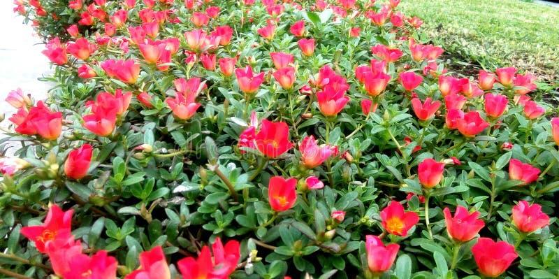 Rood onder groen royalty-vrije stock afbeeldingen