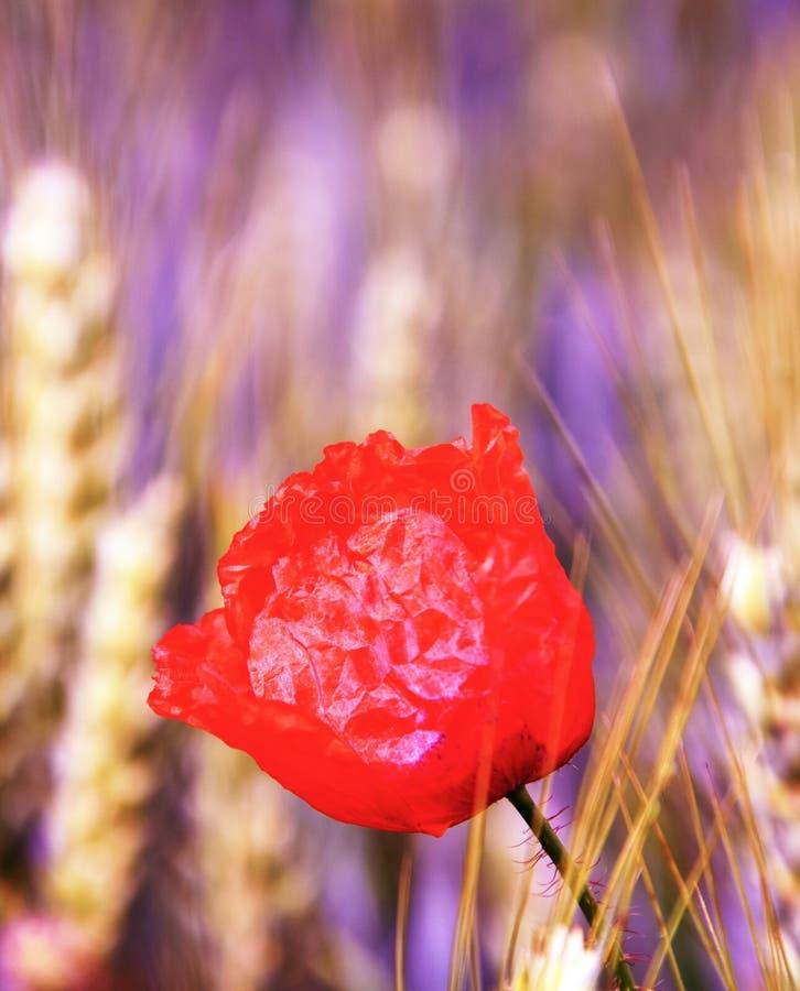 Rood onkruid stock afbeeldingen
