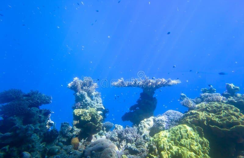 Rood overzees onderwaterkoraalrif royalty-vrije stock foto's