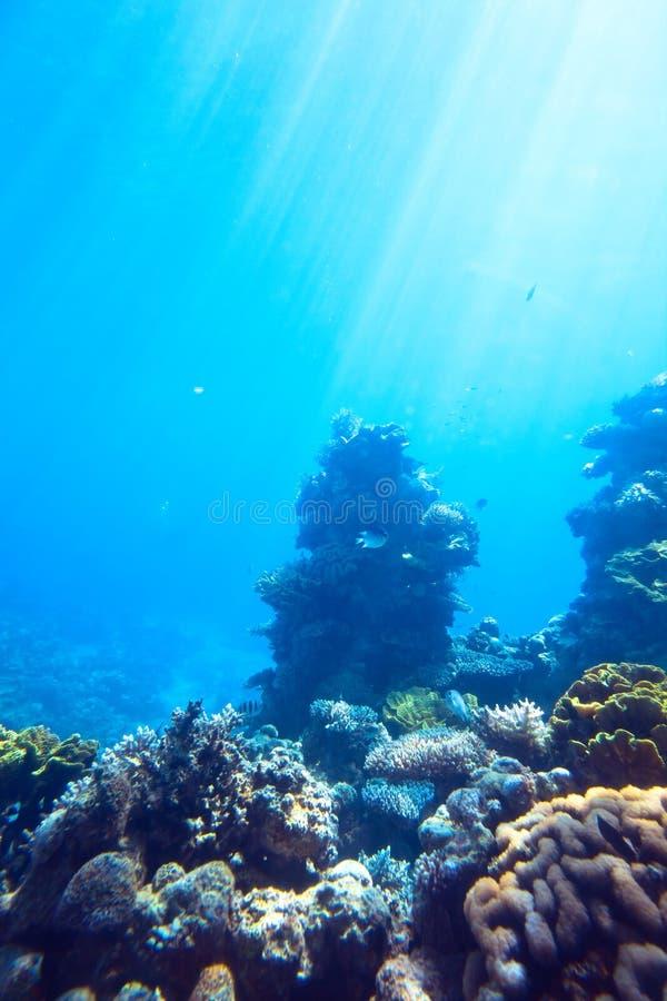 Rood overzees onderwaterkoraalrif stock afbeeldingen