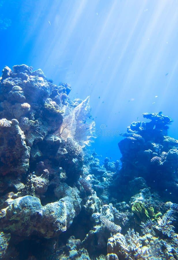 Rood overzees onderwaterkoraalrif stock foto's