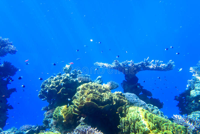 Rood overzees onderwaterkoraalrif royalty-vrije stock fotografie