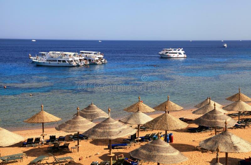 Rood Overzees strand, de Sjeik van Sharm Gr, Egypte stock fotografie