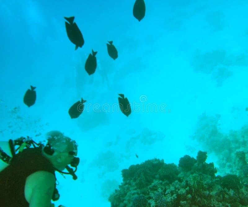 Rood Overzees vrij duiken royalty-vrije stock foto