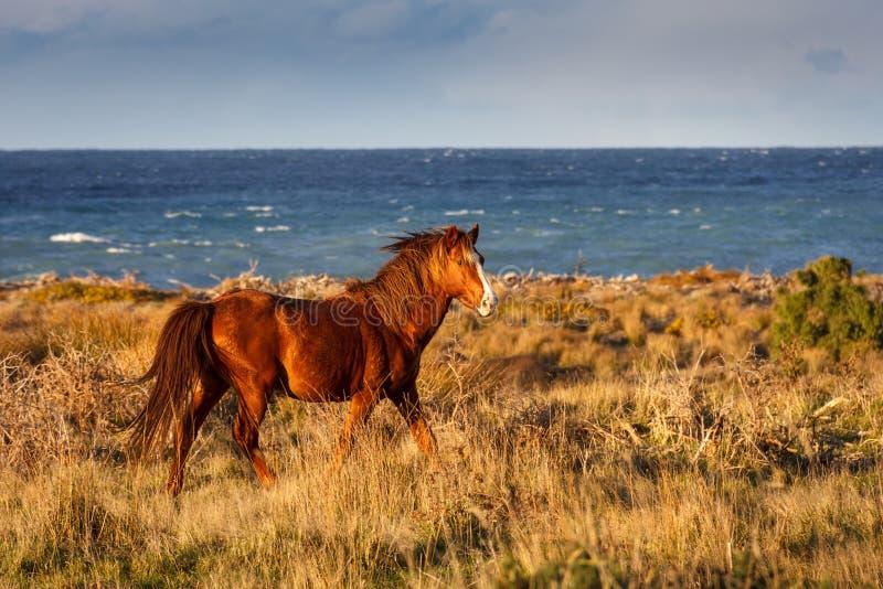 Rood paard die bij de kust lopen stock afbeeldingen