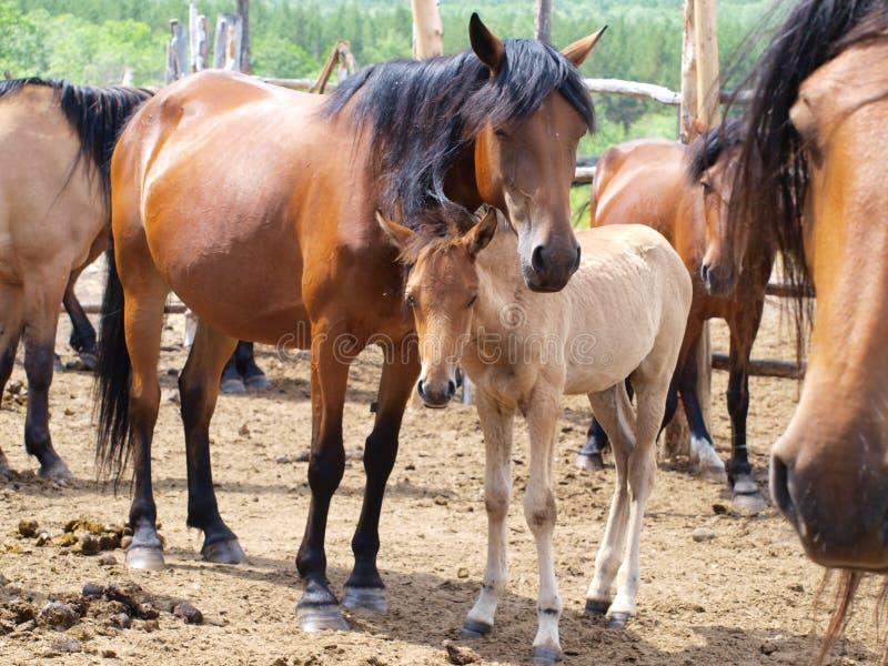 Rood paard op het landbouwbedrijf stock afbeelding