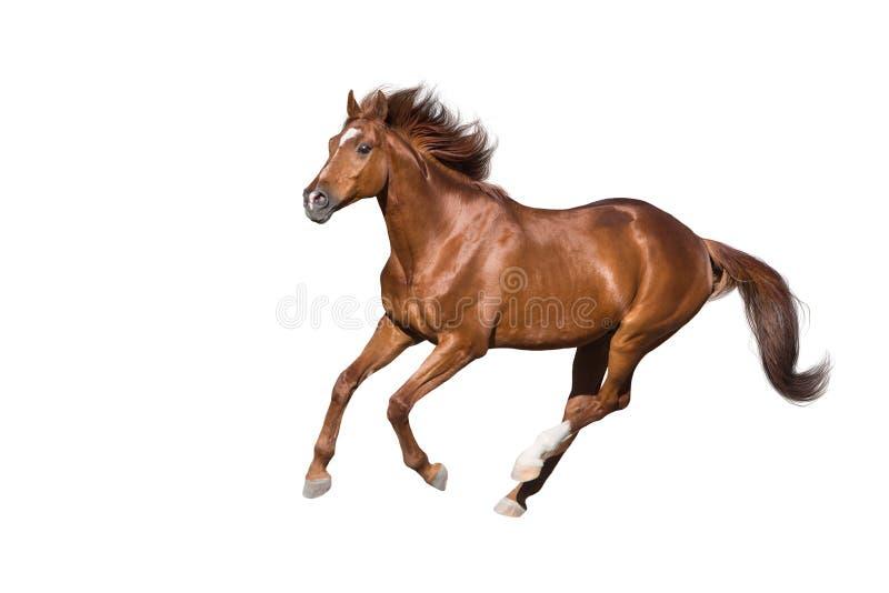Rood paard op wit royalty-vrije stock afbeelding