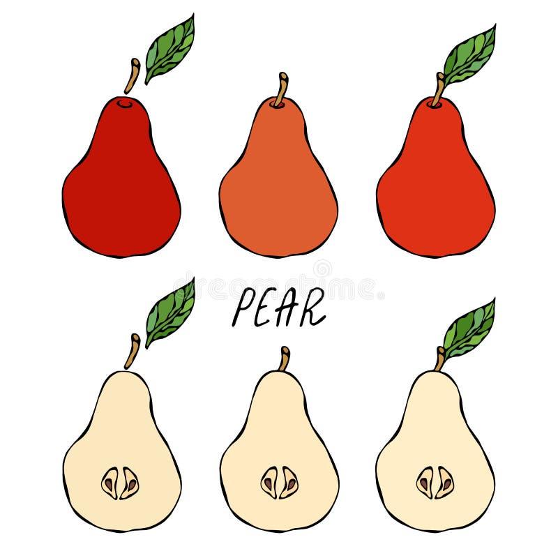 Rood Peer en Blad Het Dieet van de vers Fruitvoeding De herfst of Dalings Plantaardige Oogstinzameling Realistische Hand Getrokke royalty-vrije illustratie