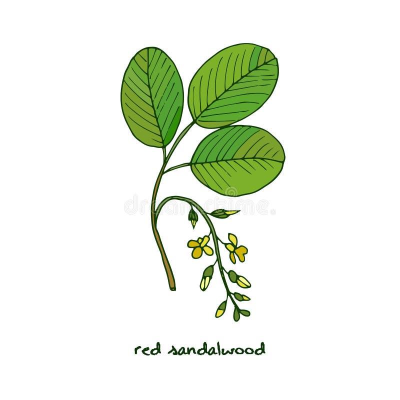 Rood sandelhout royalty-vrije illustratie