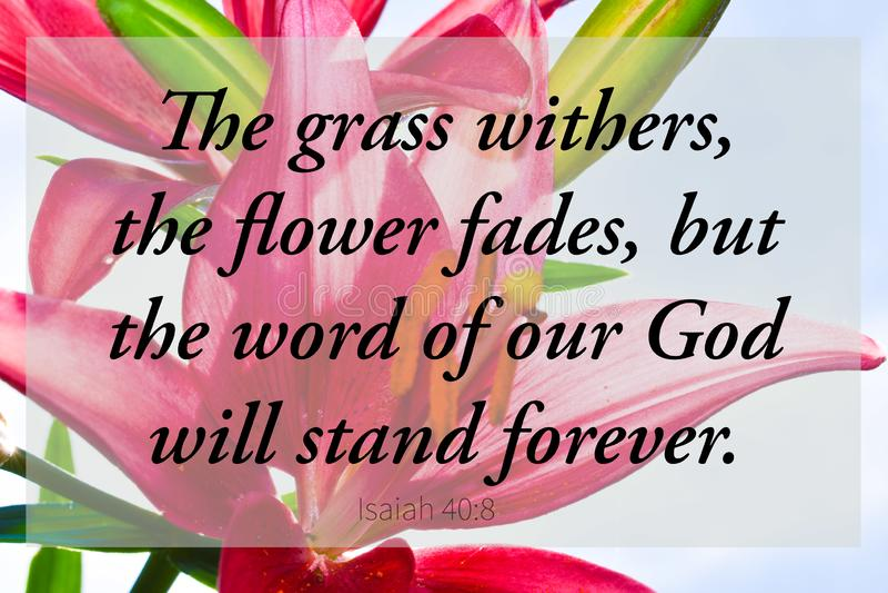 Rood scripture christelijk art. van de lilliesbijbel stock afbeeldingen