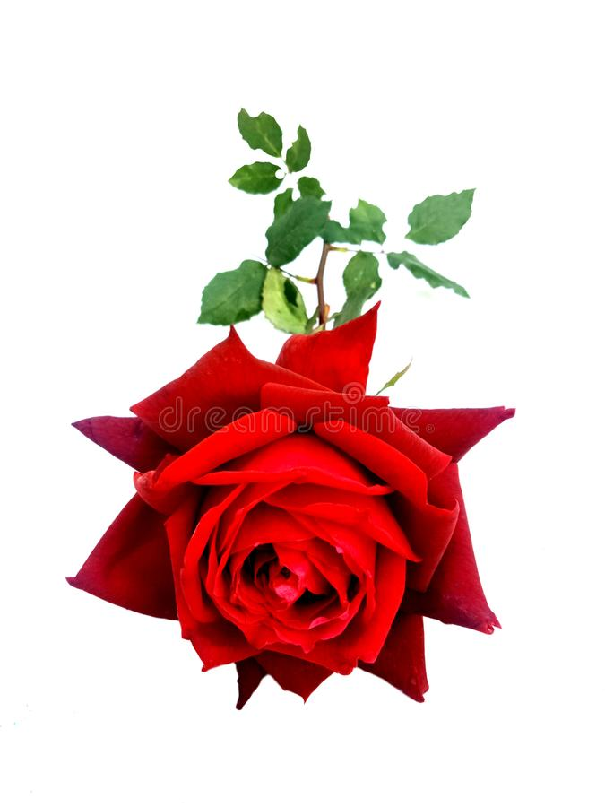 Rood Valentine nam, liefdeconcept toe De dag van de valentijnskaart `s royalty-vrije stock afbeelding
