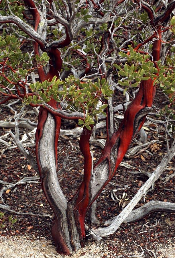 Rood, wit, en groen stock foto