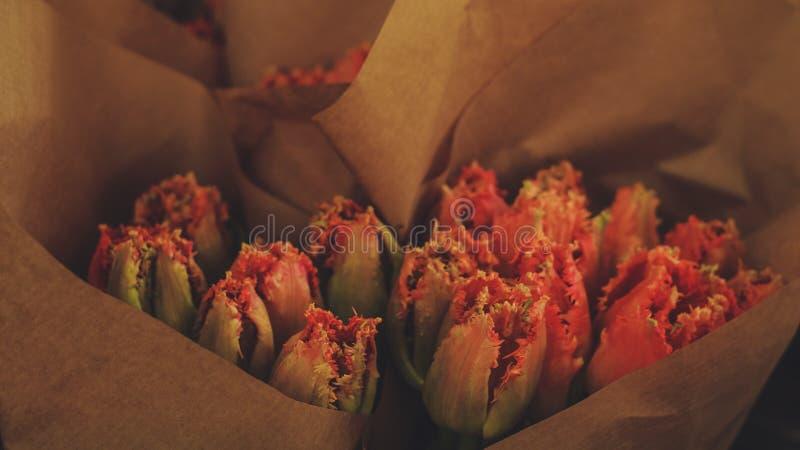 Roodachtige tulpen stock fotografie