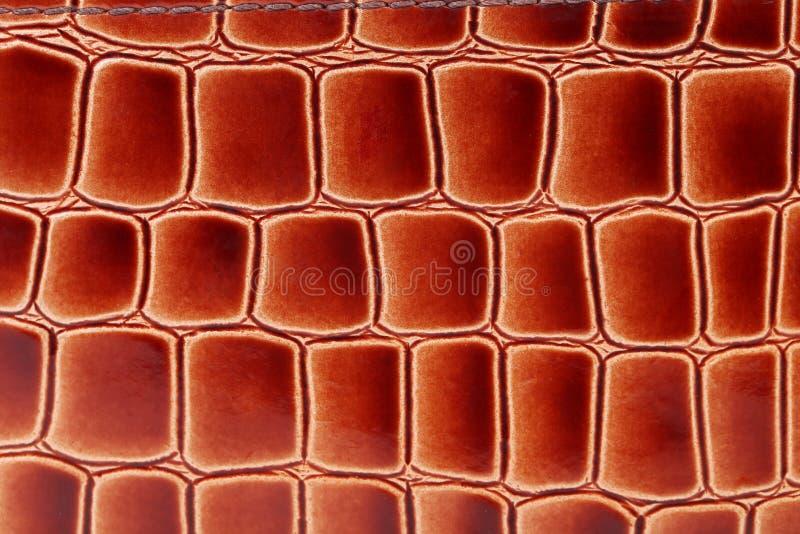 Roodbruine kleur van krokodilhuid. stock afbeeldingen