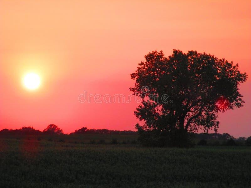 Roodgloeiende Silhouetzonsondergang royalty-vrije stock foto's