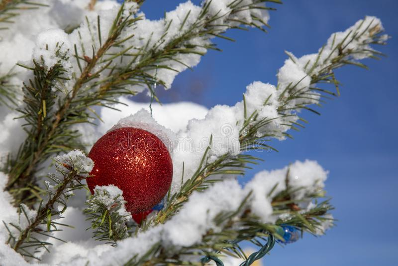 Roodkerstval op Snowy Tree stock foto's