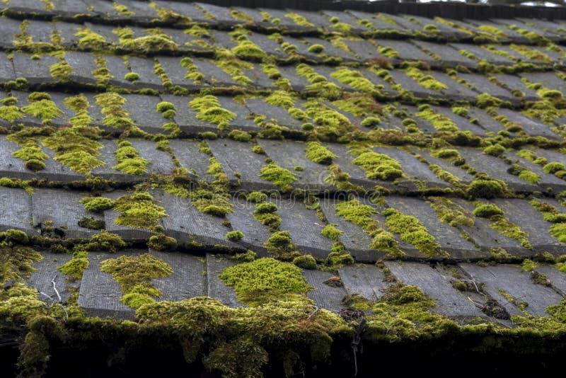 Mold Moss Damage On House Roof Shingles Stock Photo
