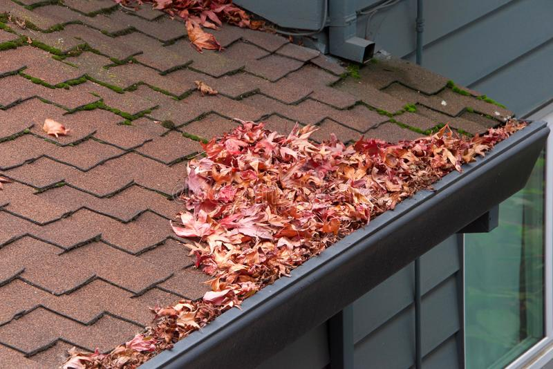 Leaves clogging rain gutters on a roof. Roof of house, rain gutters clogged with leaves, sticks and debris from trees. Increased risk of rusting, increased need royalty free stock photos
