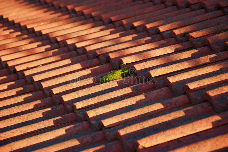 Download Roof and moss stock photo. Image of overlap, ceramic - 16168094