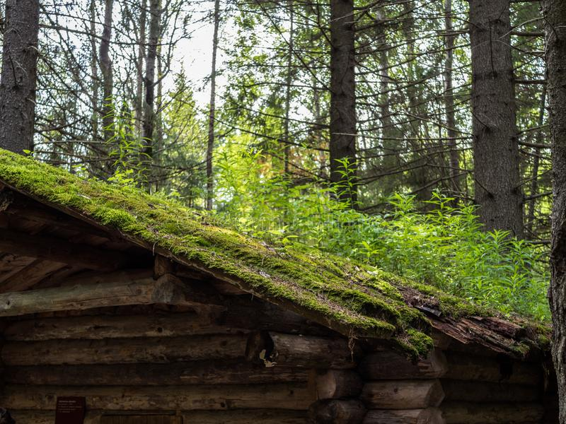 The roof of old desolate hunting hut overgrown with grass and moss. Forest landcape with part of hunting hut stock image