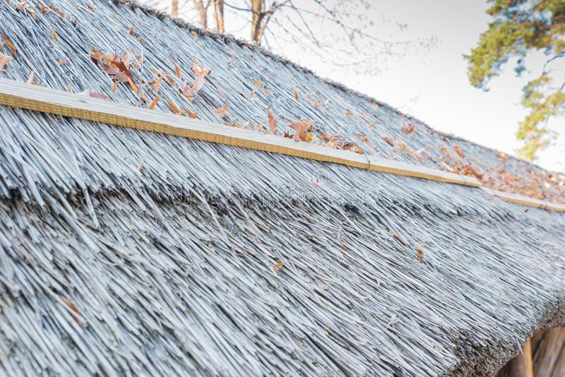 Roof of reed stock photography