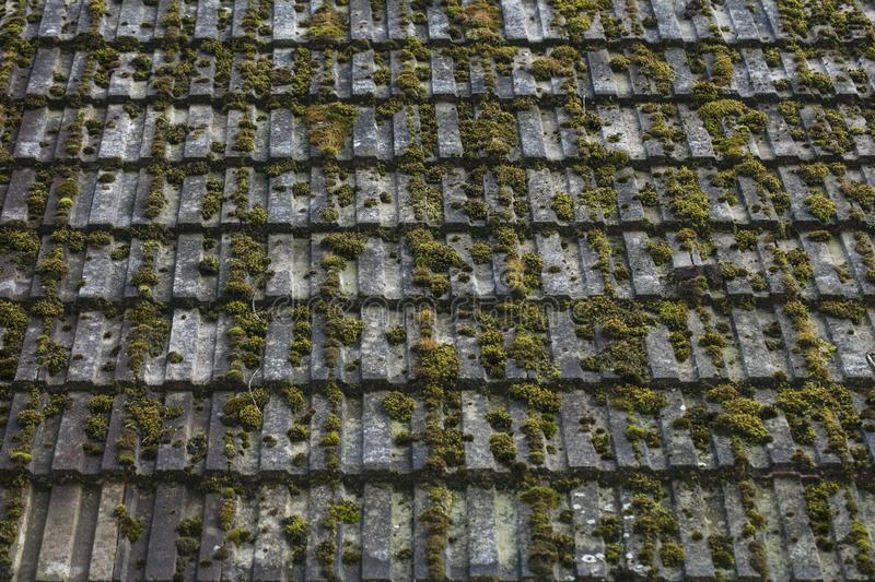Roof tile covered with green moss royalty free stock images