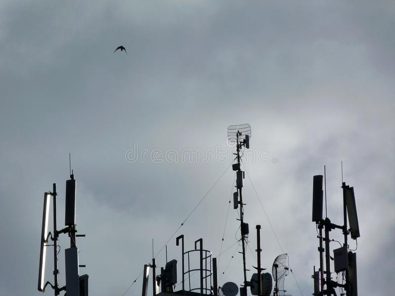 Roof top radio transmitters and pigeon under blue sky stock photography