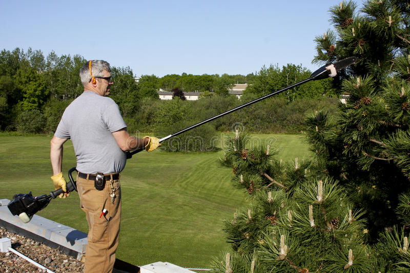 Download Roof top tree trimming stock photo. Image of maintenance - 24831364