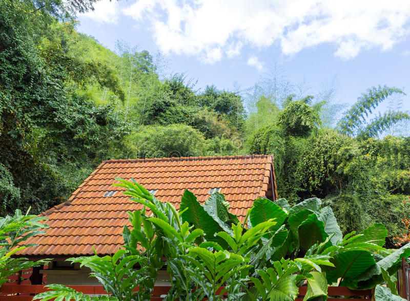 Roof of the tropical house