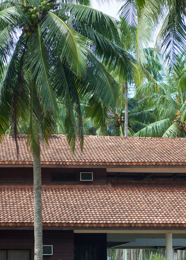 Roofing Construction. Building attic house construction with different types of roof designs. royalty free stock images