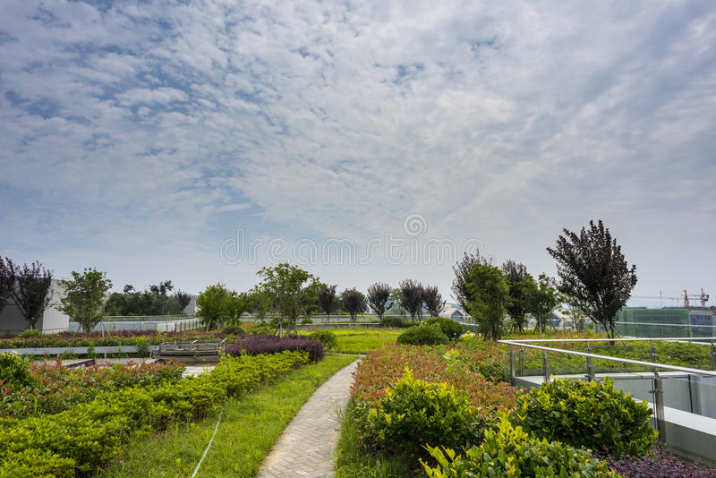 Rooftop garden royalty free stock photo