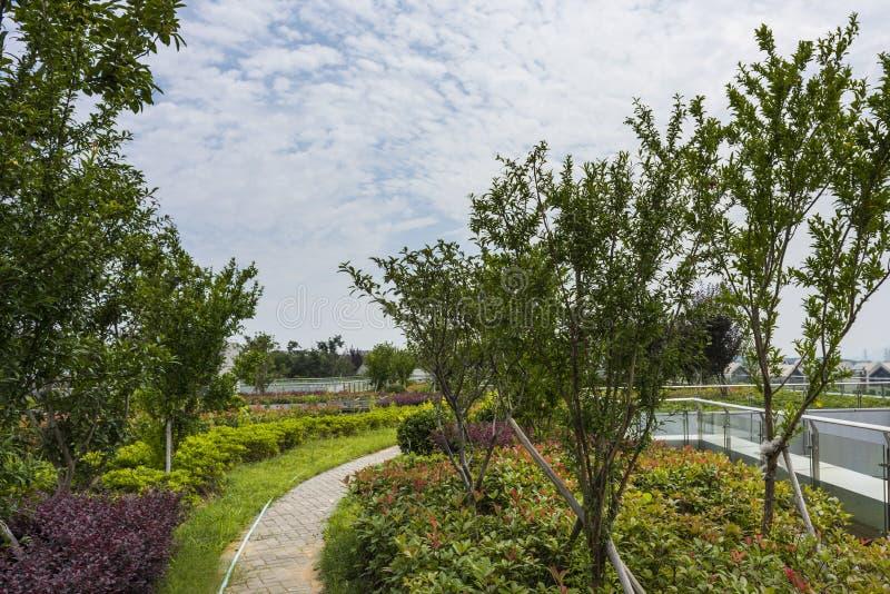 Rooftop garden stock images