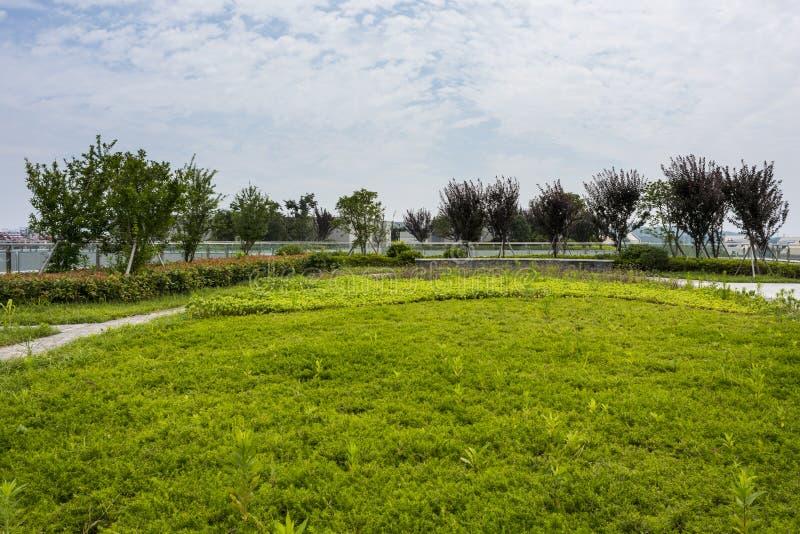Rooftop garden stock photo