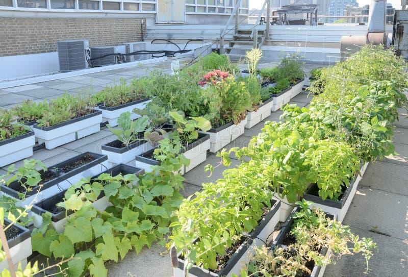 Rooftopträdgård arkivbilder