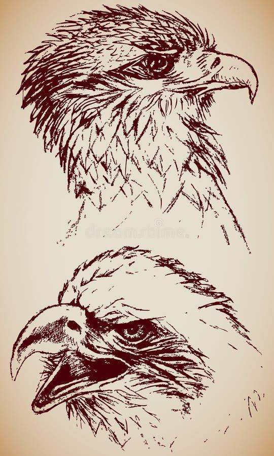 Roofvogels royalty-vrije illustratie
