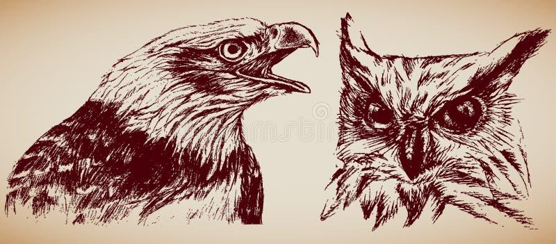 Roofvogels vector illustratie