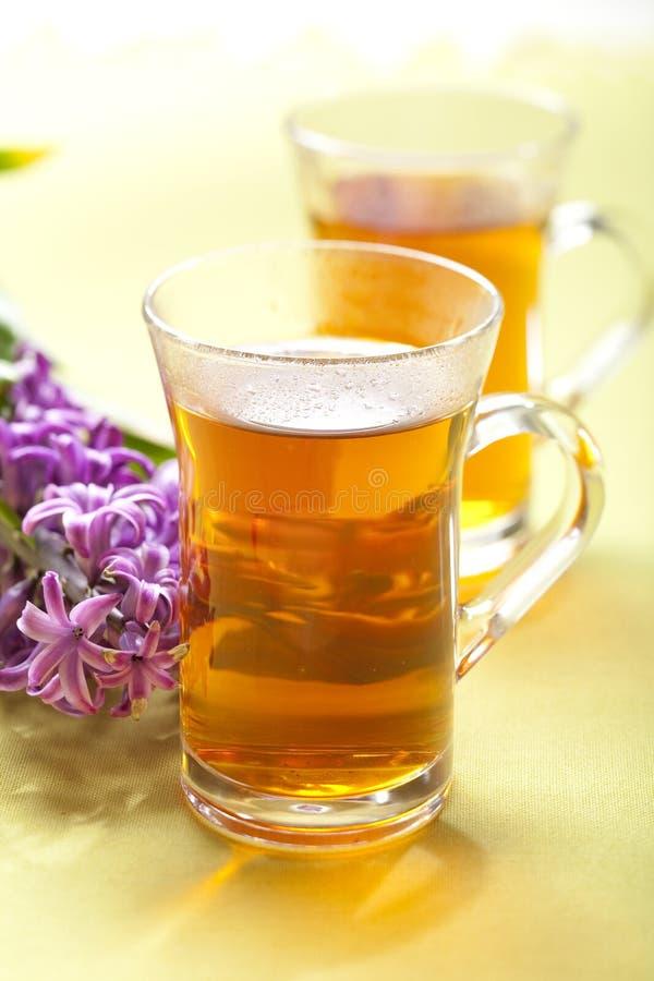 Download Rooibos tea stock image. Image of flower, herb, rooibos - 8500429
