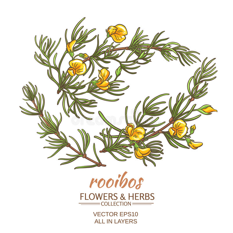 Download Rooibos vektoruppsättning vektor illustrationer. Illustration av afrikansk - 76700655