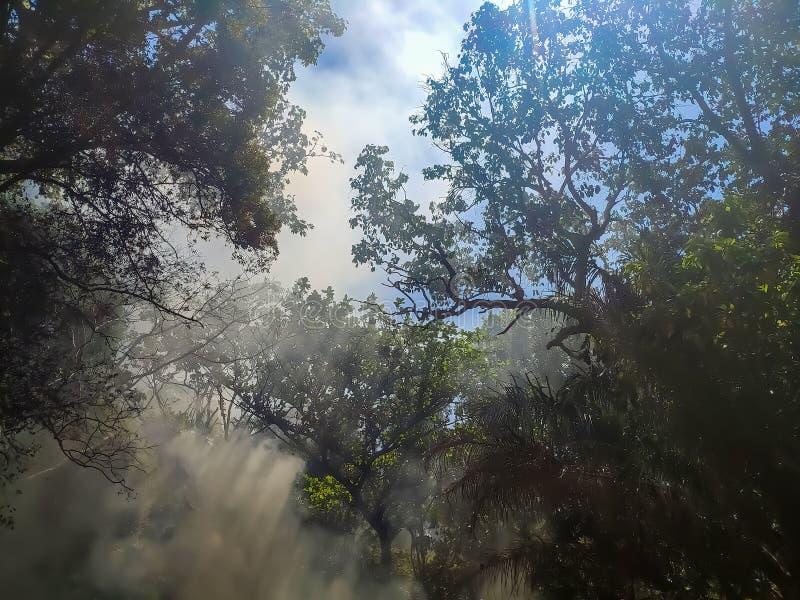 Rook en brand in de groene wildernissen Zonsporen in de hemel royalty-vrije stock foto's