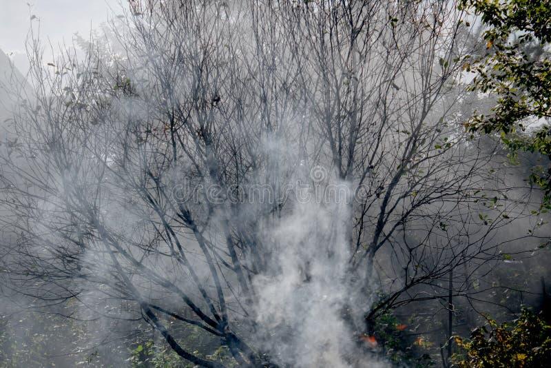 Rook op het tuinperceel in de takken van bomen royalty-vrije stock foto's