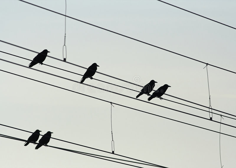 Rook Silhouettes royalty free stock photo