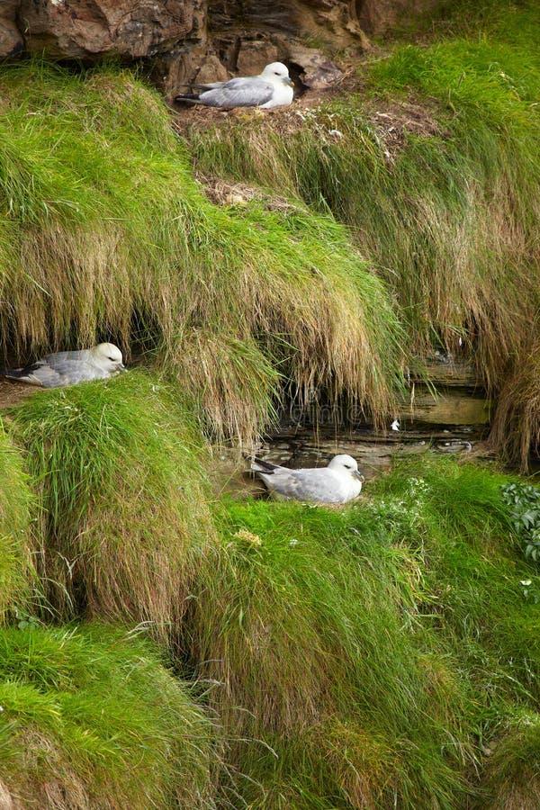 rookery птиц стоковое изображение rf
