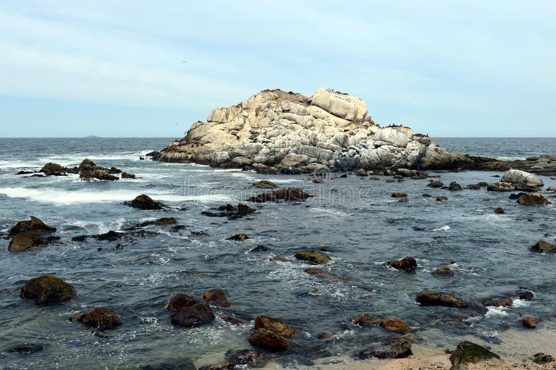 A rookery of southern sea lions in Vina del Mar. VINA DEL MAR, CHILE - NOVEMBER 24,2014: A rookery of southern sea lions in Vina del Mar stock photo