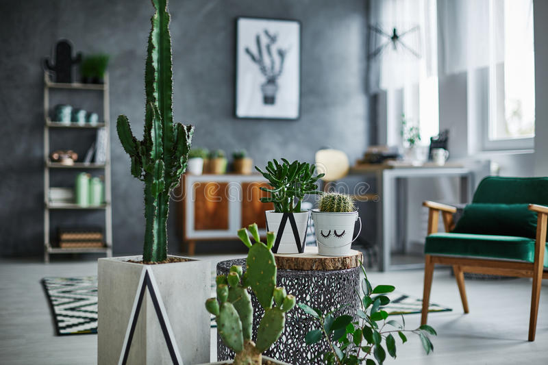 Room with cacti decorations. Modernly designed room with cacti decorations stock images