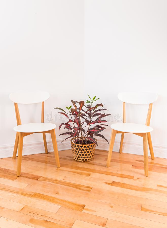 Room corner with elegant chairs and colorful Croton plant royalty free stock photo