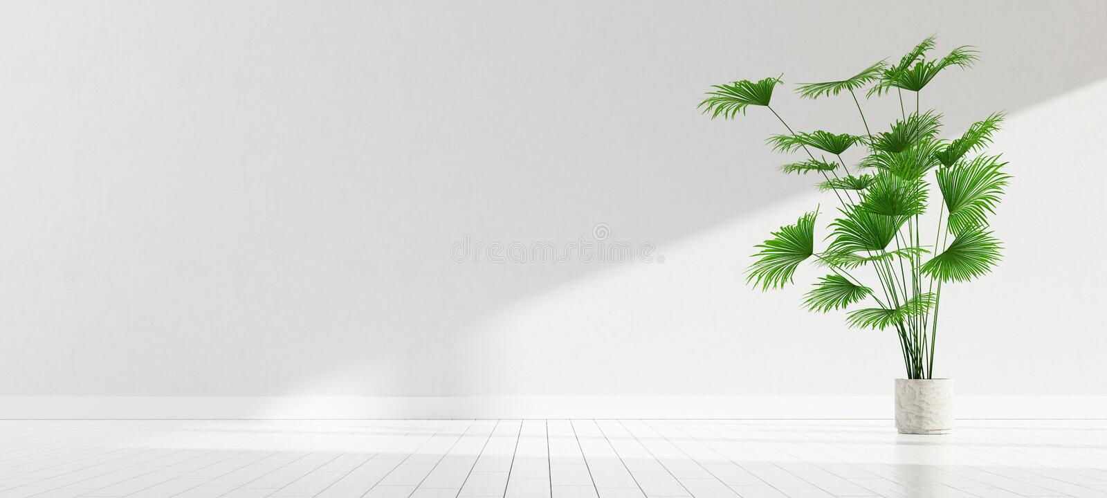 Room interior with a green plant, white wall. 3D render illustration. Room interior with a green plant, white wall with sunlight mock up background. 3D render vector illustration